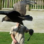 Vogelshow im Heide-Wildpark